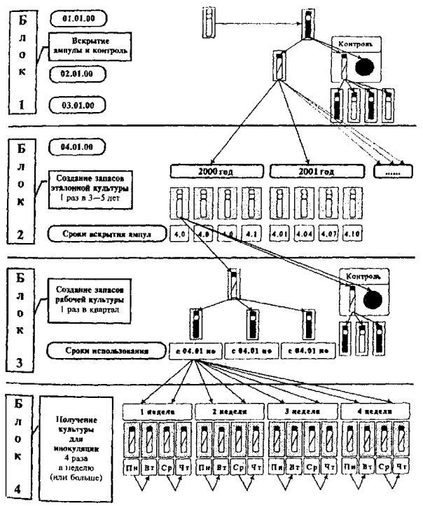 Схема оптимального варианта с